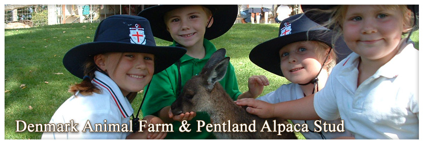 Pentland Alpaca Stud & Animal Farm - Children feeding a kangaroo