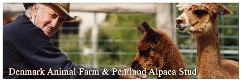 Pentland Alpaca Stud & Animal Farm - Alpacas