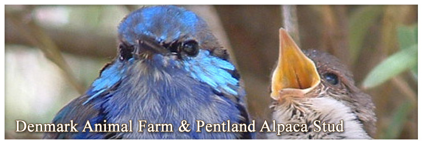 Pentland Alpaca Stud & Animal Farm - Wrens
