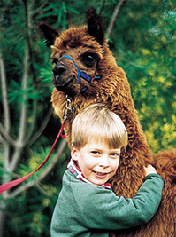 Boy with an Alpaca